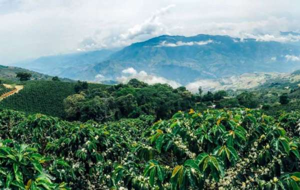 Hope for the price c and the coffee industry